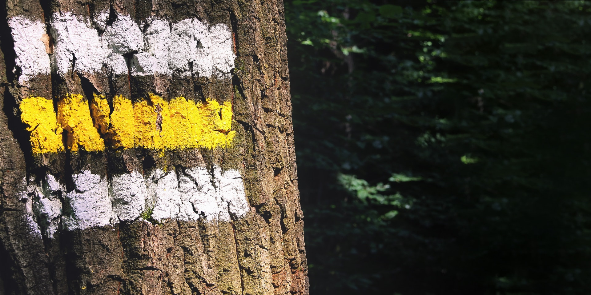A brown tree trunk marked with three thick color powdered-lines on it.
